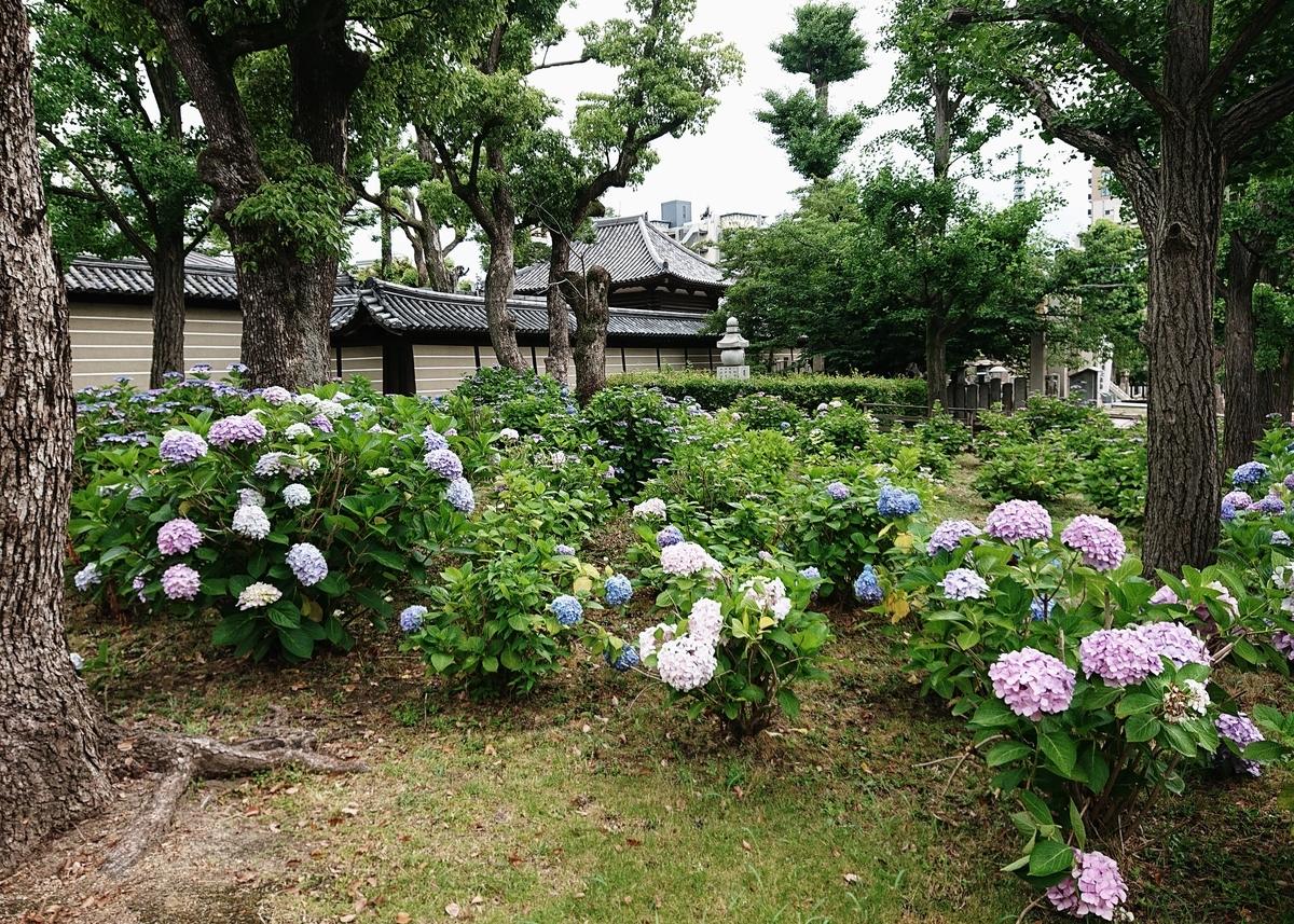f:id:Kaimotu_Hatuji:20200613180335j:plain