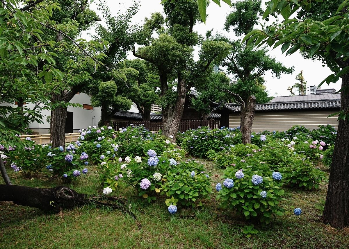 f:id:Kaimotu_Hatuji:20200613180403j:plain