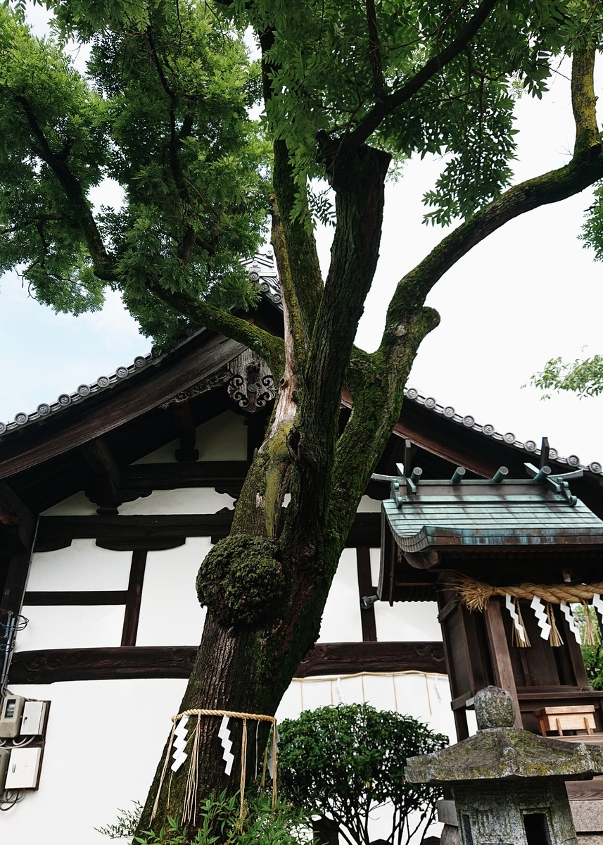 f:id:Kaimotu_Hatuji:20200626093544j:plain