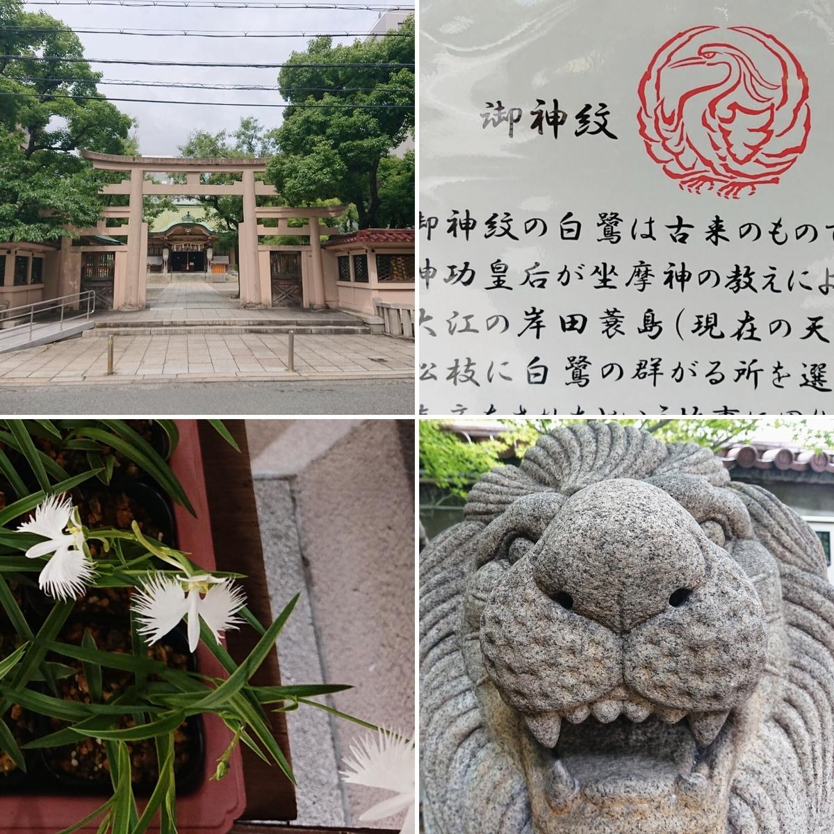 f:id:Kaimotu_Hatuji:20200712151233j:plain