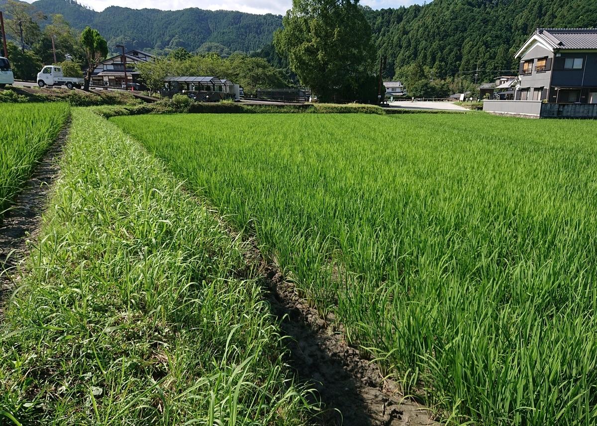 f:id:Kaimotu_Hatuji:20200802070421j:plain