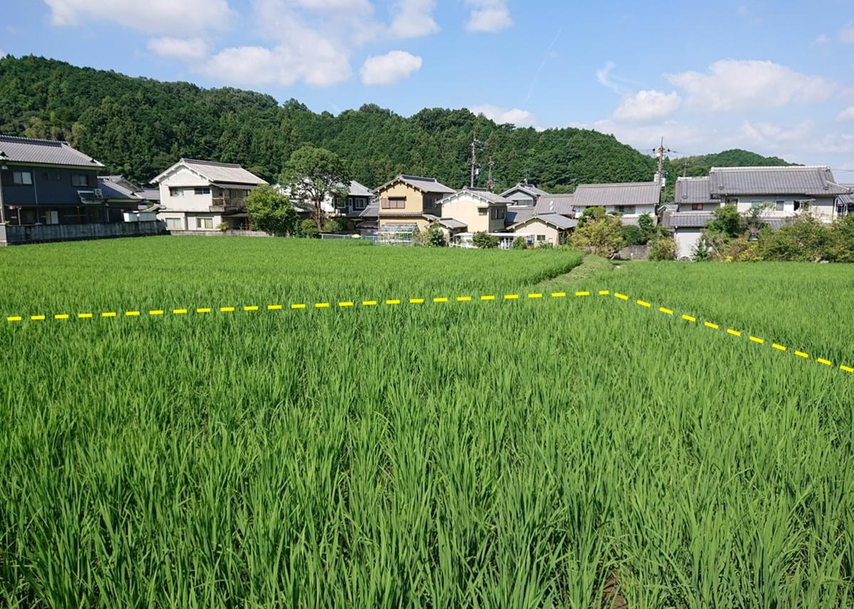 f:id:Kaimotu_Hatuji:20200802144430p:plain