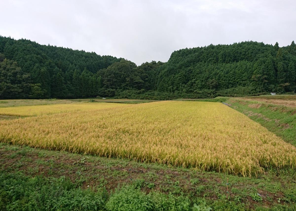 f:id:Kaimotu_Hatuji:20200926190729j:plain