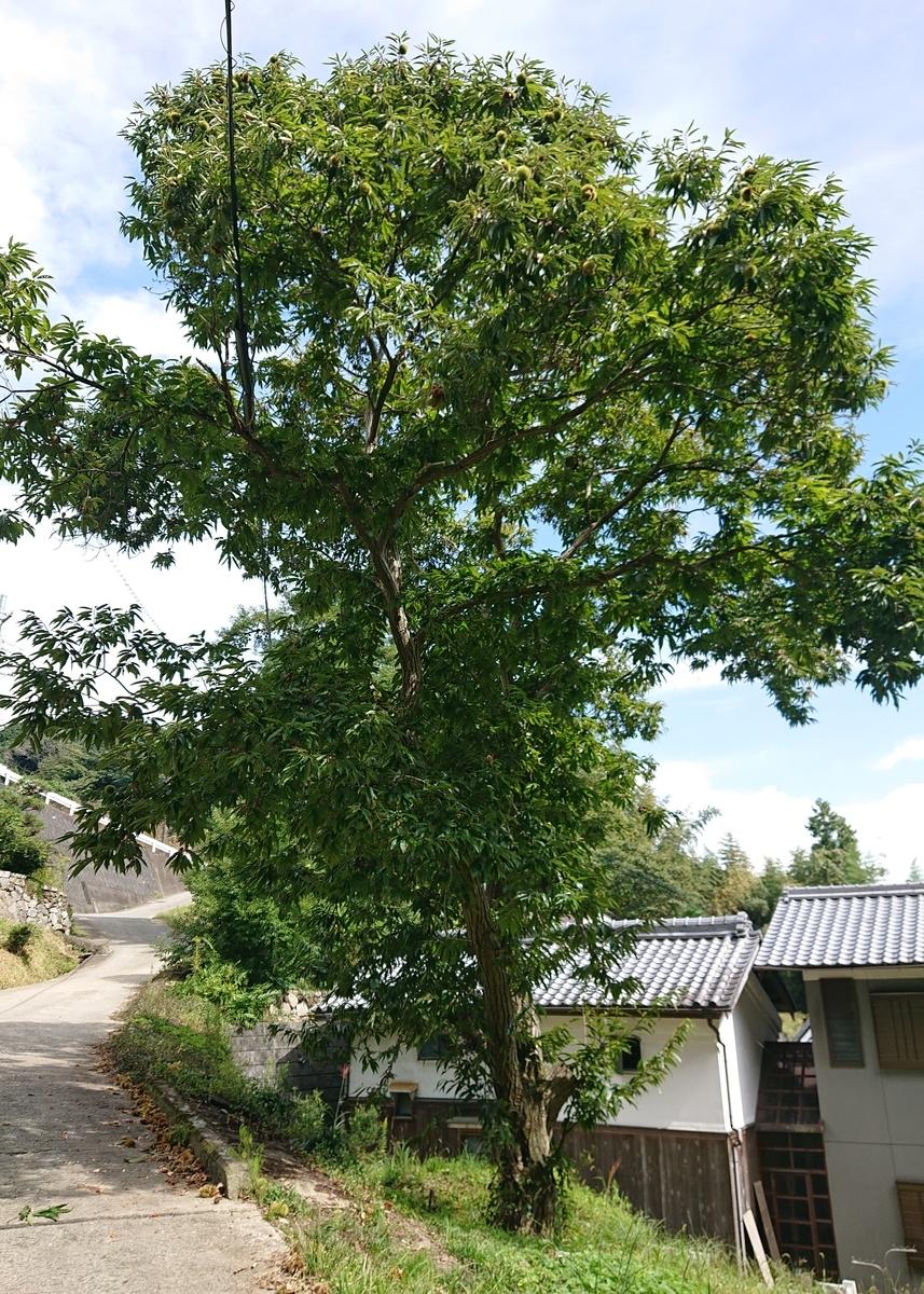 f:id:Kaimotu_Hatuji:20201003172933j:plain