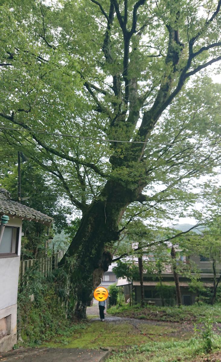f:id:Kaimotu_Hatuji:20201004155038p:plain