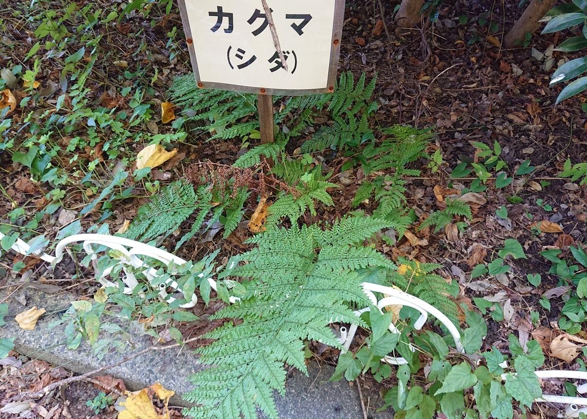 f:id:Kaimotu_Hatuji:20201021042225j:plain