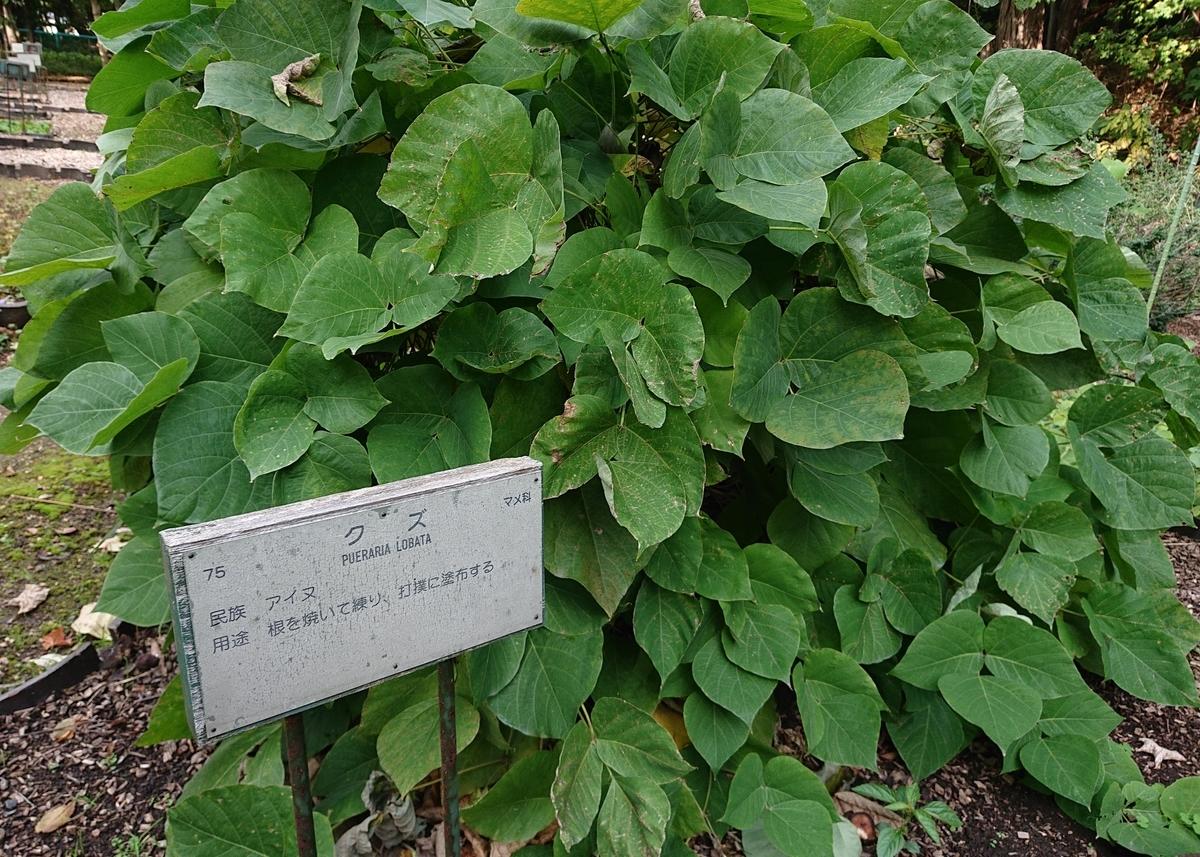 f:id:Kaimotu_Hatuji:20201029135933j:plain
