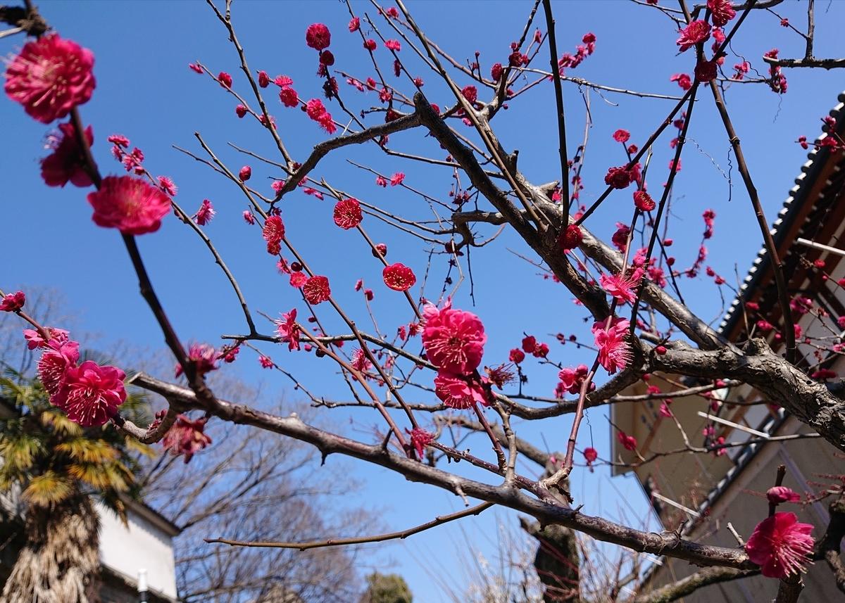 f:id:Kaimotu_Hatuji:20210220115234j:plain