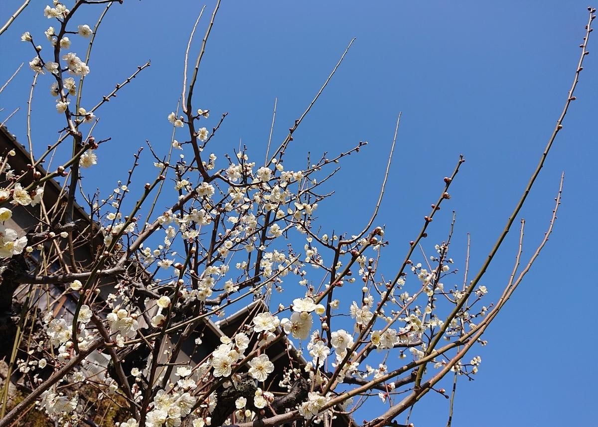 f:id:Kaimotu_Hatuji:20210220115318j:plain