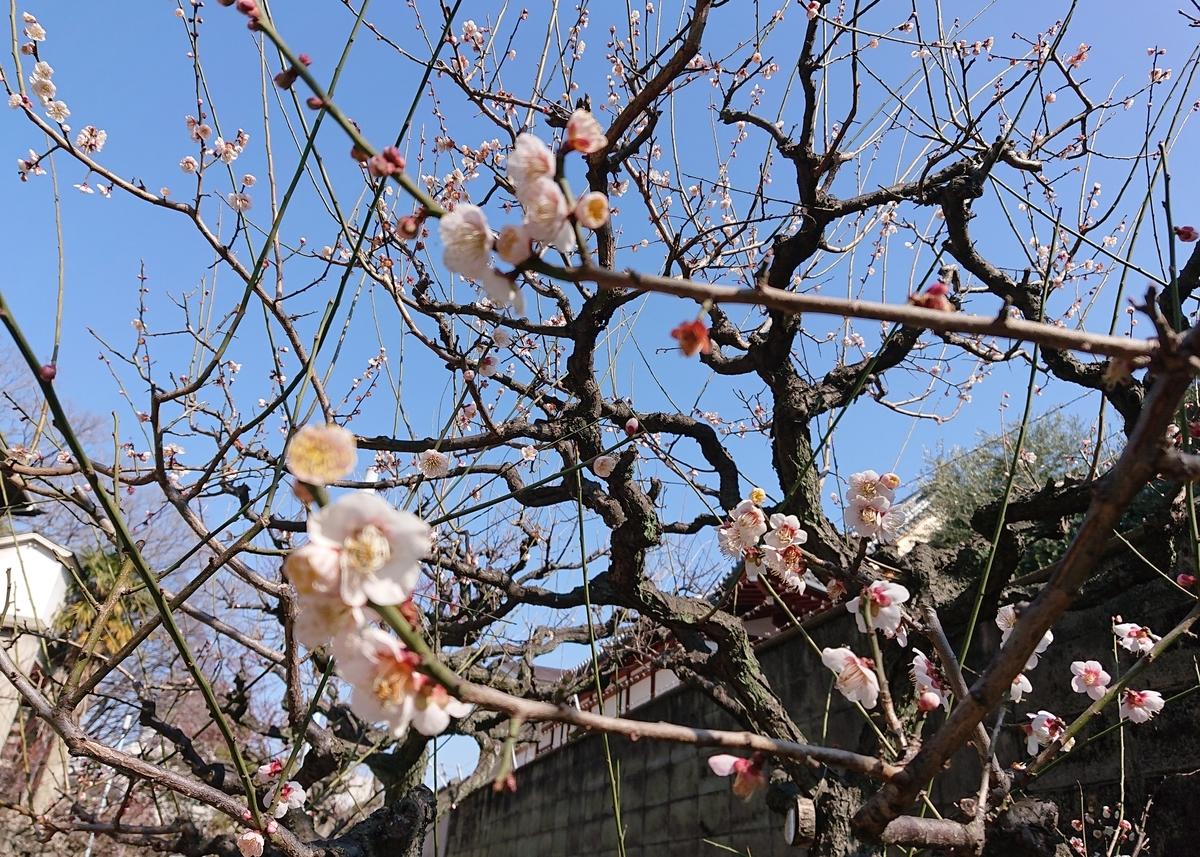 f:id:Kaimotu_Hatuji:20210220115341j:plain