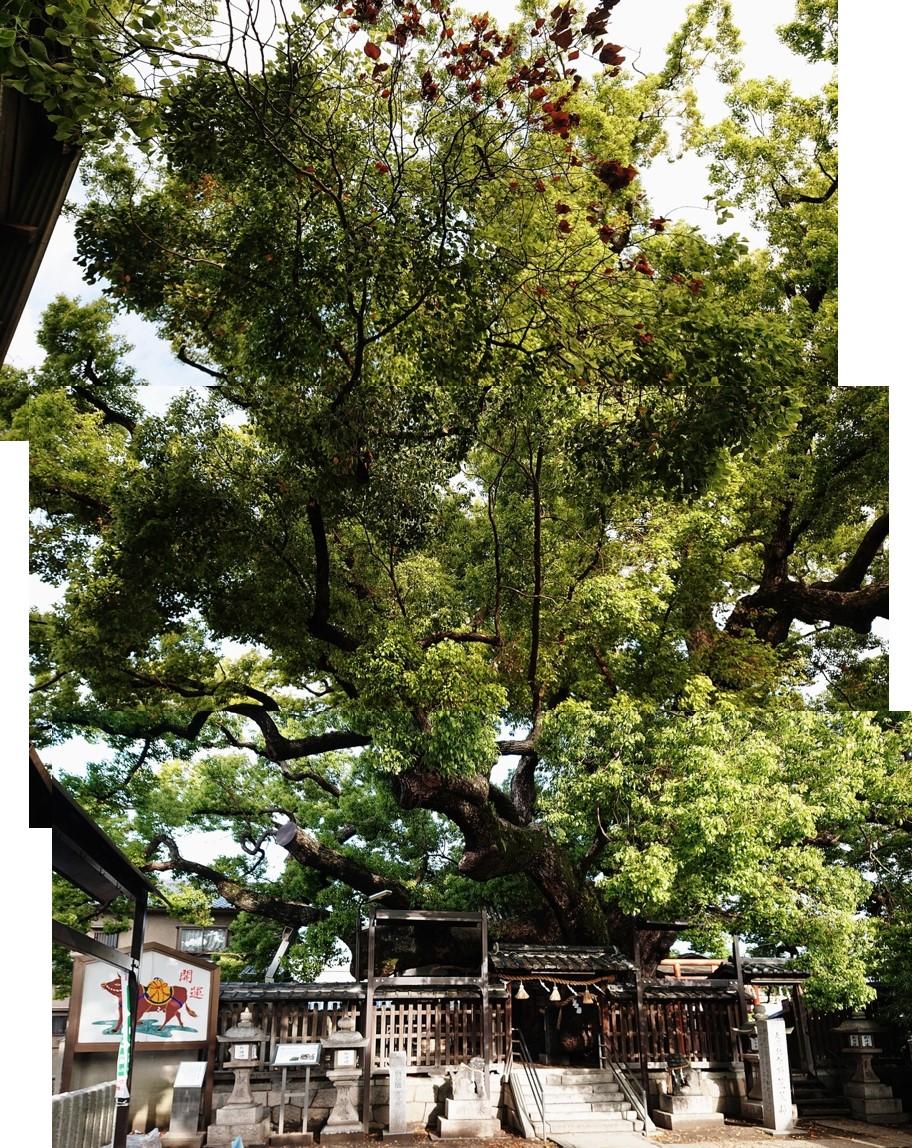 f:id:Kaimotu_Hatuji:20210420085302j:plain