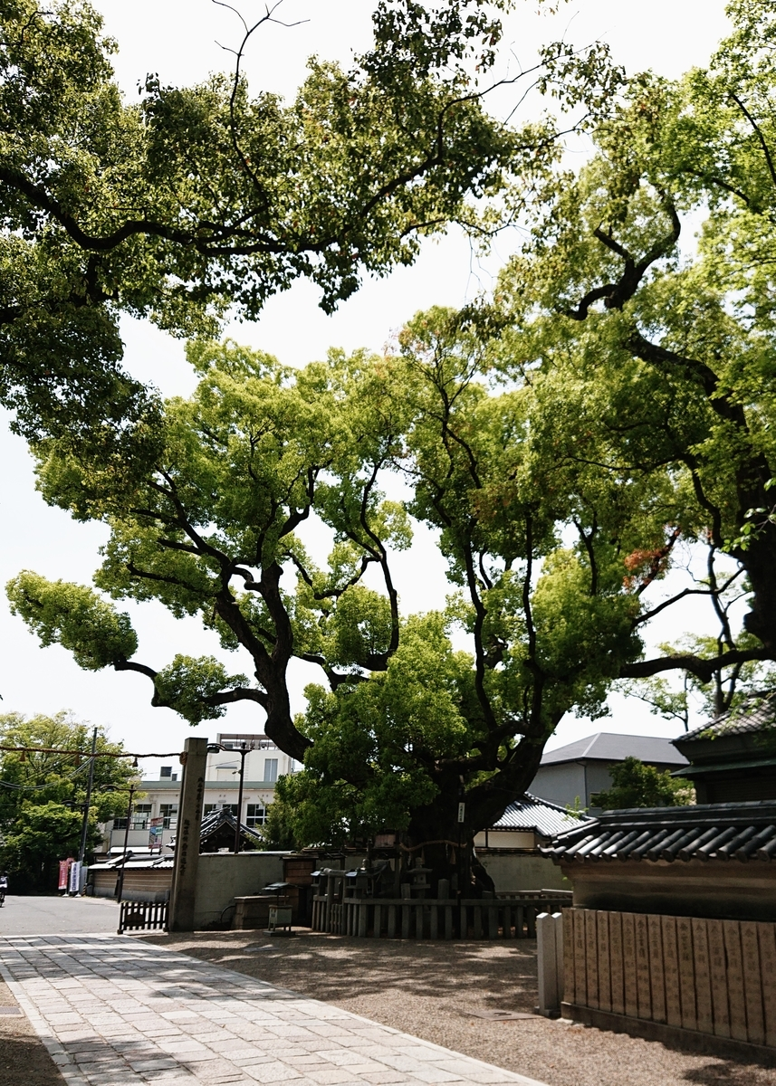 f:id:Kaimotu_Hatuji:20210430090800j:plain