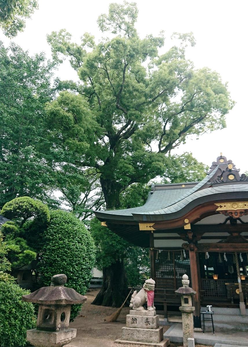 f:id:Kaimotu_Hatuji:20210528143047j:plain