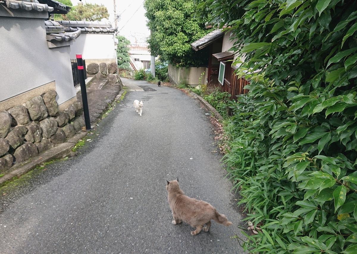f:id:Kaimotu_Hatuji:20210604131503j:plain