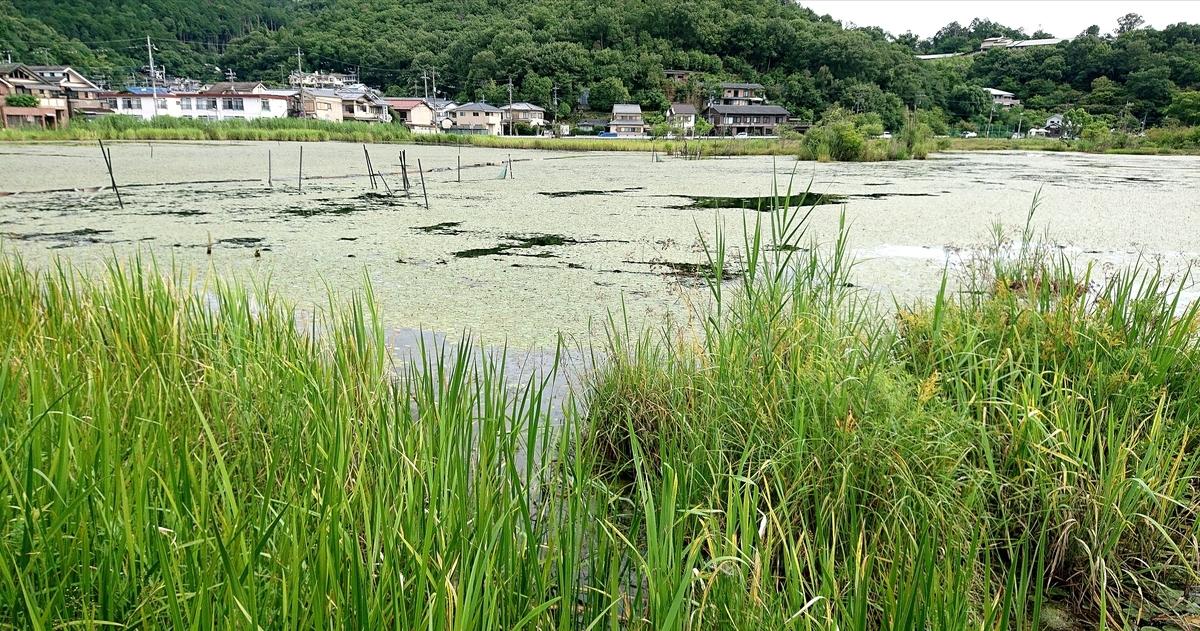 f:id:Kaimotu_Hatuji:20210702151544j:plain