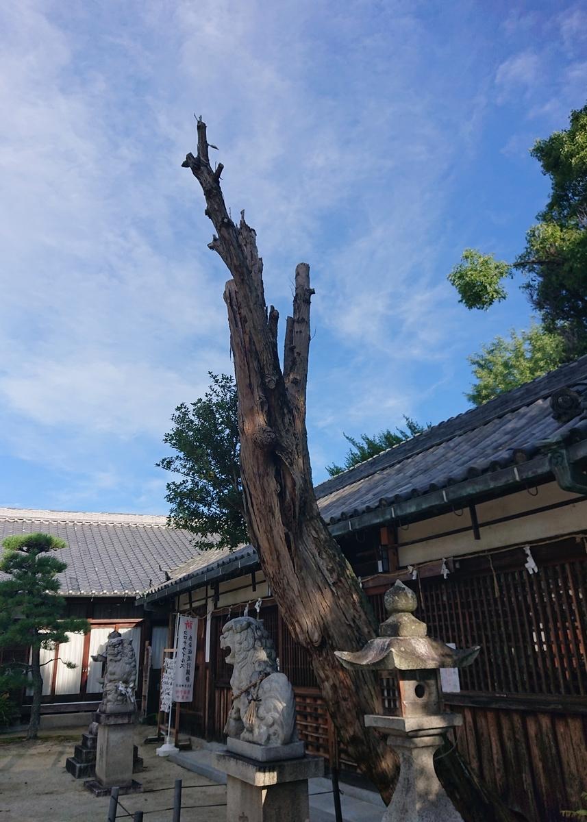 f:id:Kaimotu_Hatuji:20210717153337j:plain