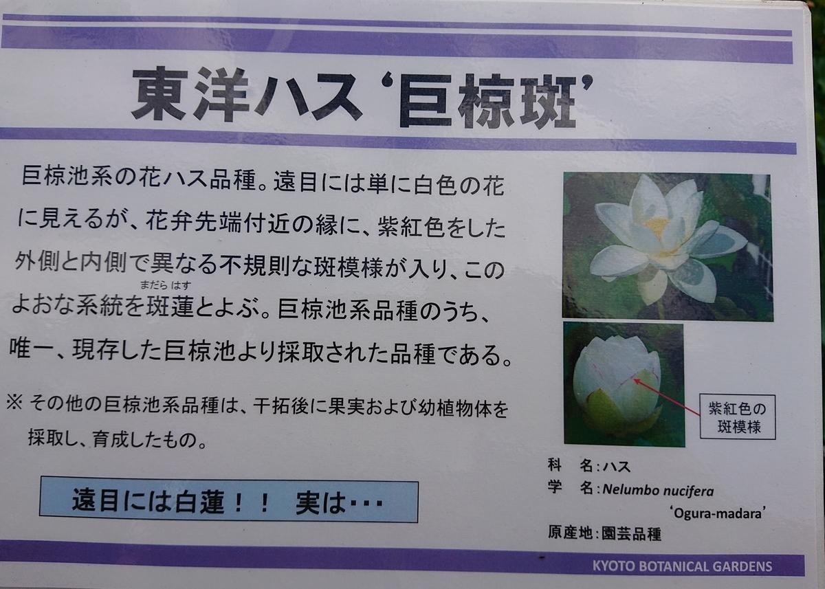 f:id:Kaimotu_Hatuji:20210722172016j:plain