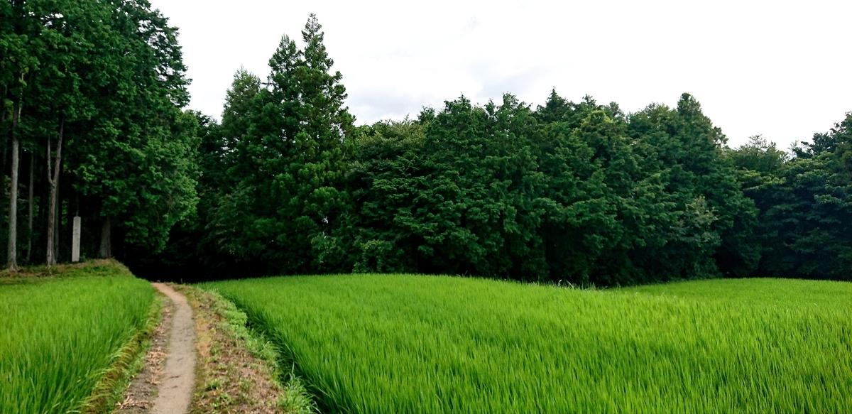 f:id:Kaimotu_Hatuji:20210825061610j:plain