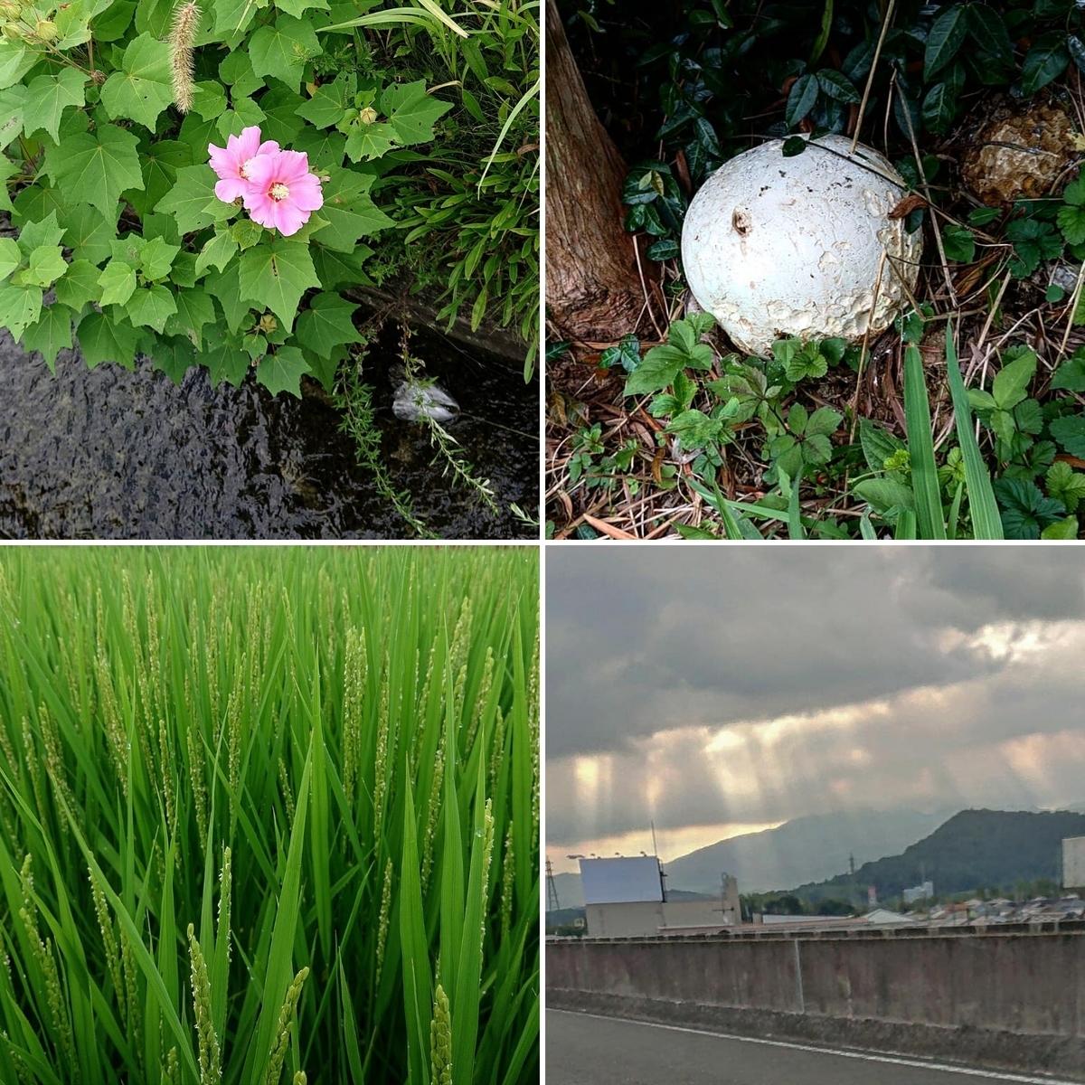 f:id:Kaimotu_Hatuji:20210902174916j:plain