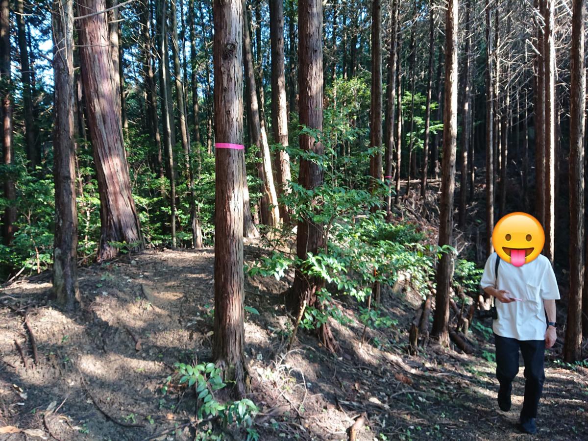 f:id:Kaimotu_Hatuji:20210925162056j:plain