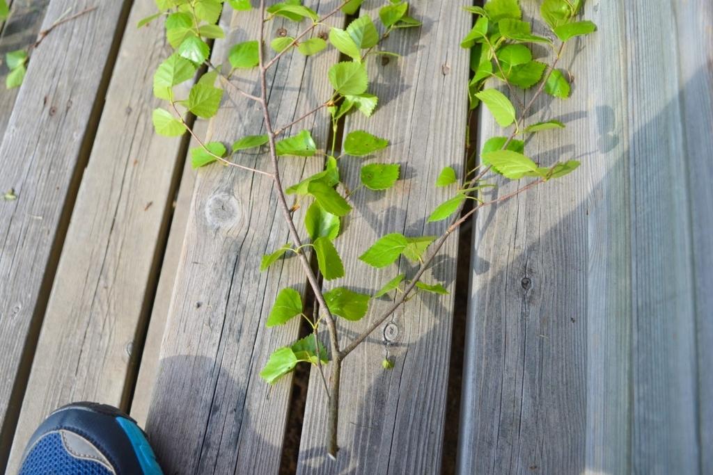 広がってる枝
