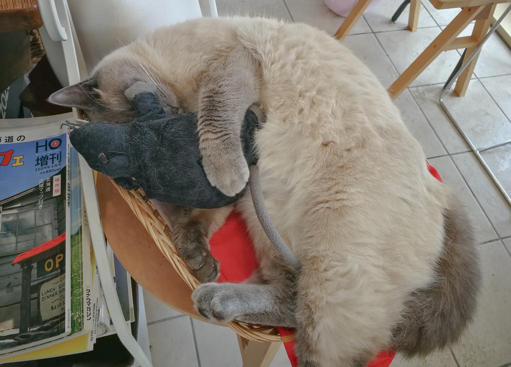 店の中で熟睡する猫