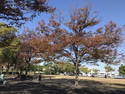 f:id:Kamakura-An:20181127212432j:plain