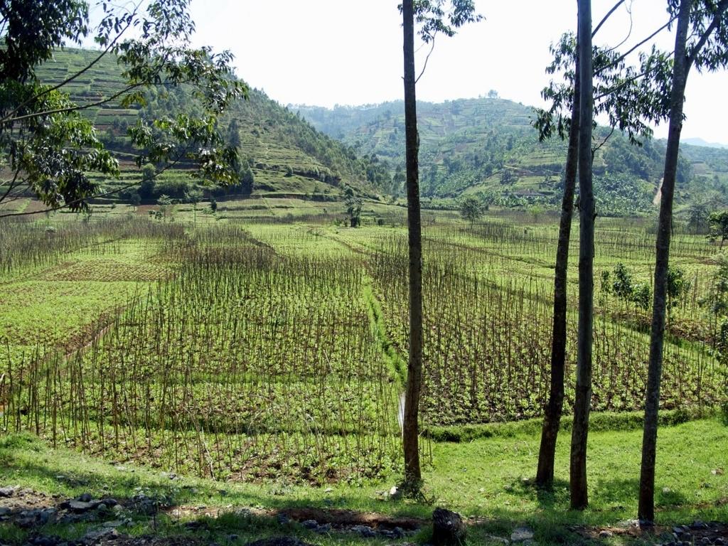 ルワンダ 旅行