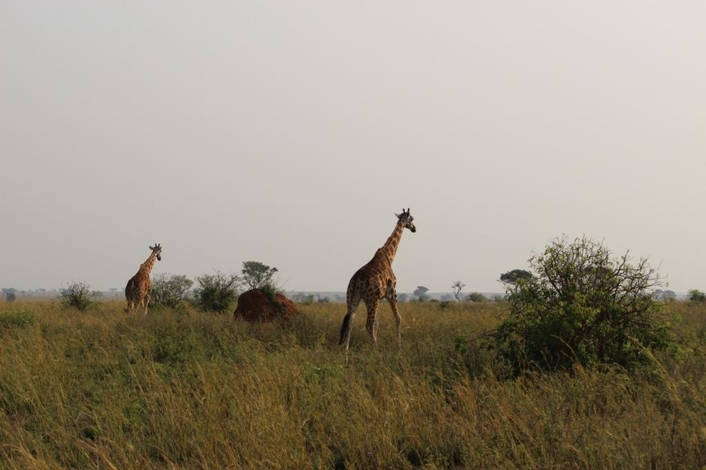 ウガンダ サファリ