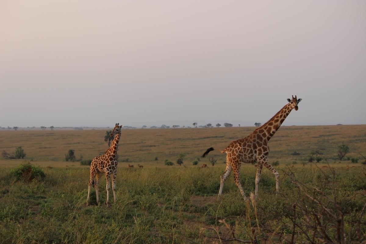 ウガンダ 観光