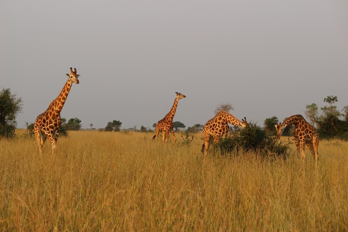 アフリカ旅行 持ち物