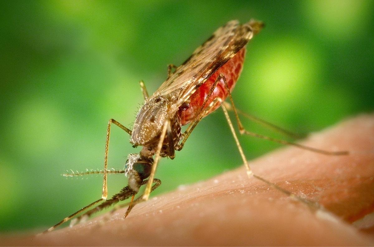アフリカ マラリア 対策