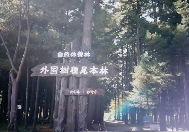 mihonrin (640x448).jpg