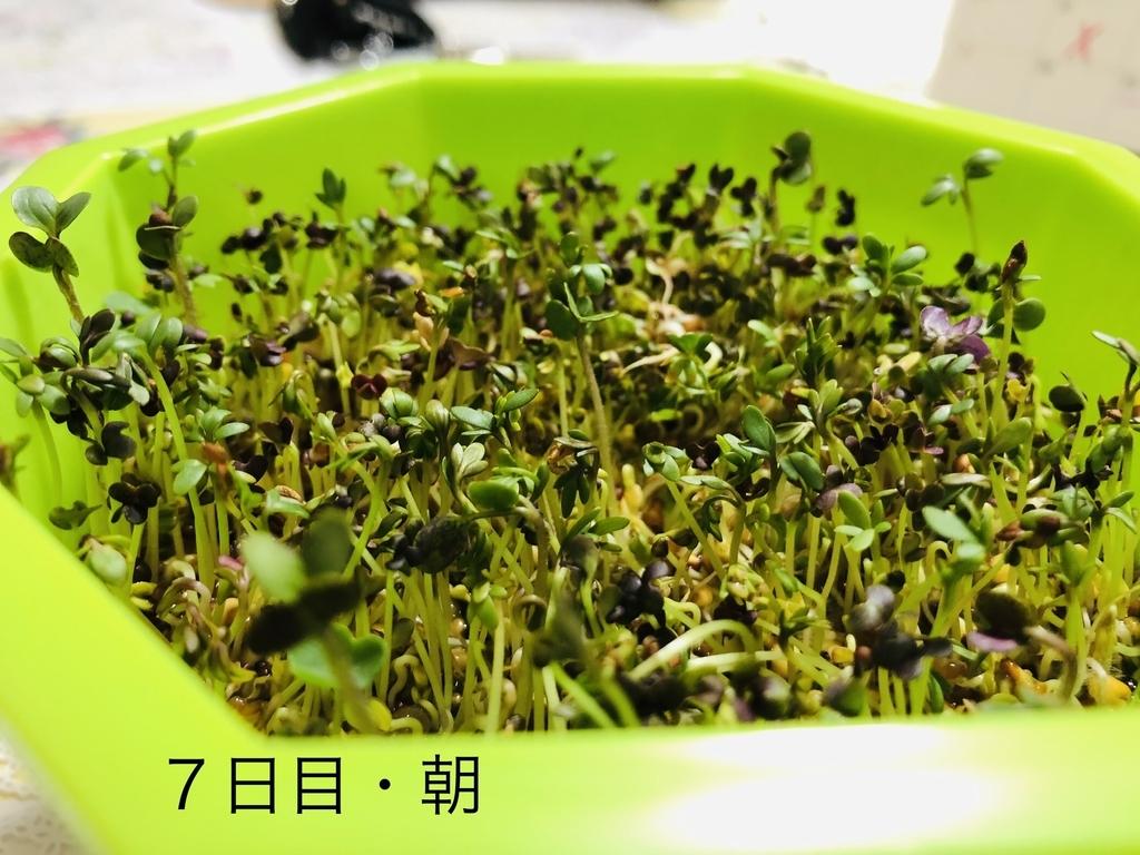 f:id:Kawayoko_Yuki:20190202232930j:plain
