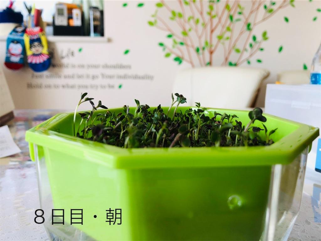 f:id:Kawayoko_Yuki:20190204191637j:plain