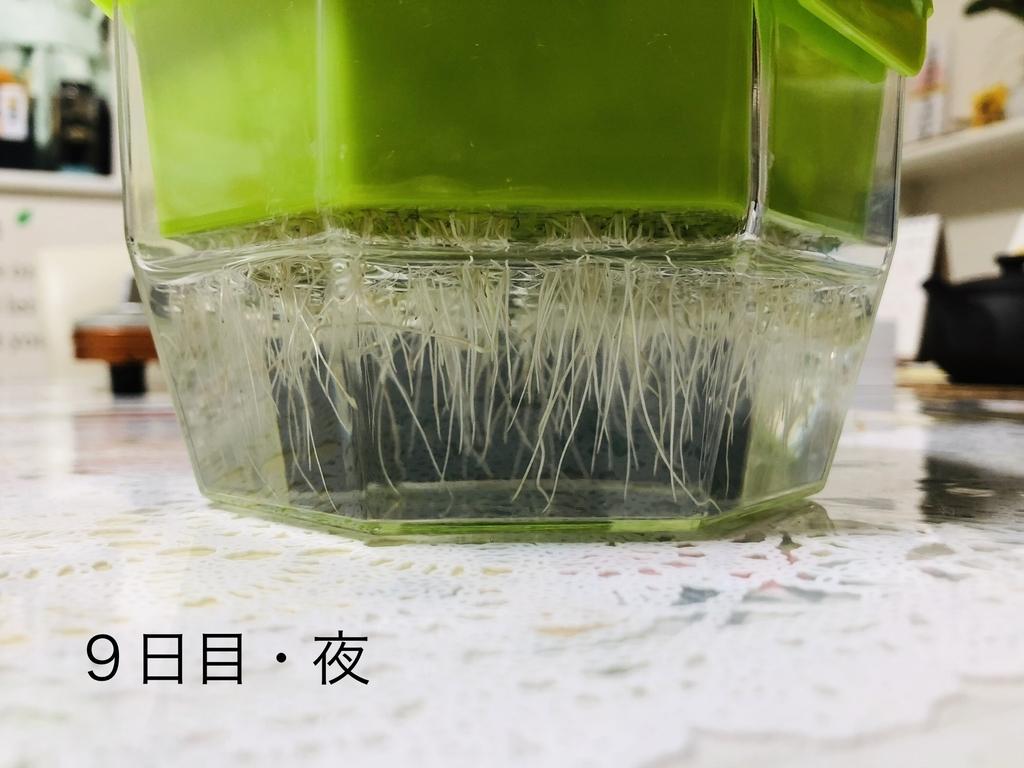 f:id:Kawayoko_Yuki:20190204231803j:plain
