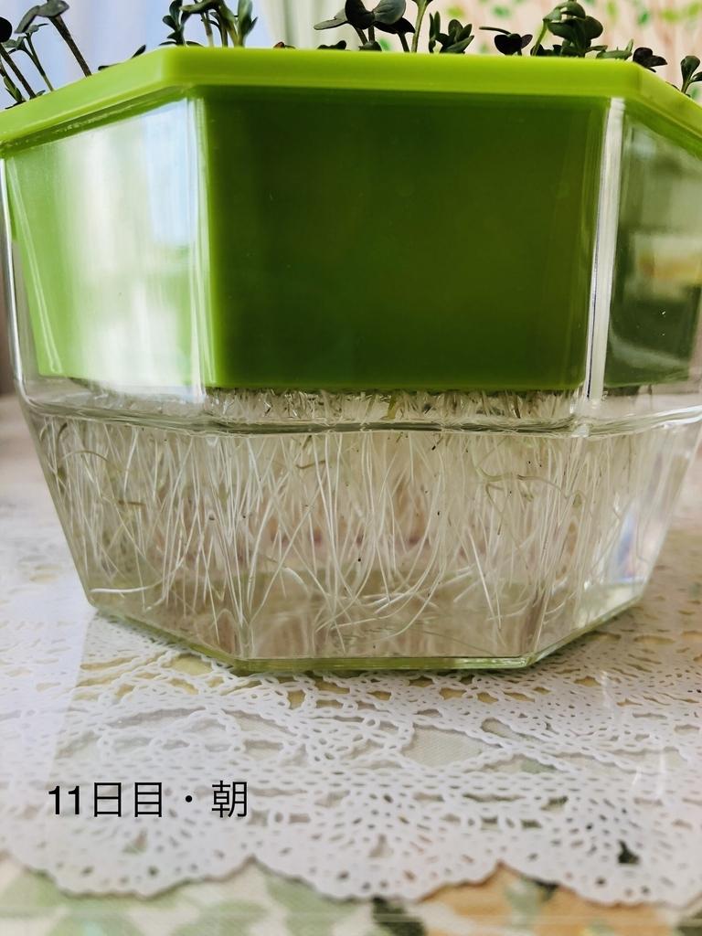 f:id:Kawayoko_Yuki:20190204234232j:plain