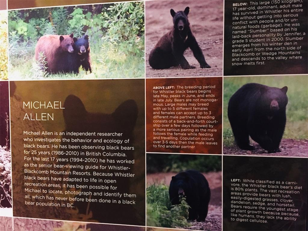 bears-in-whistler