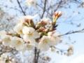f:id:Kazumiiru:20140329174744j:image:medium
