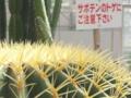 f:id:Kazumiiru:20140503124553j:image:medium
