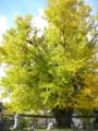 f:id:Kazumiiru:20141108191622j:image:medium