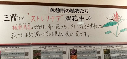 f:id:Kazumiiru:20190113232113j:plain