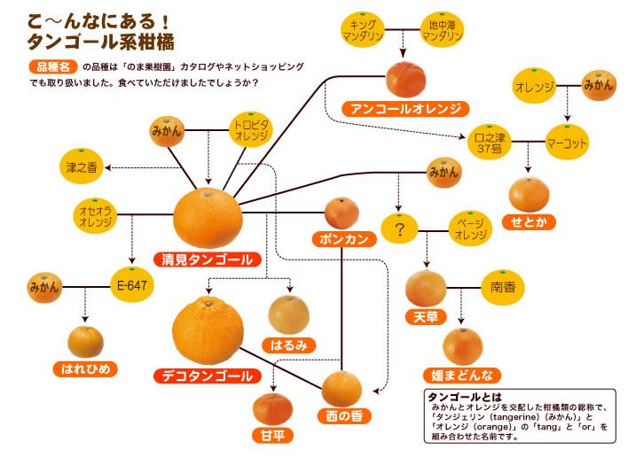 オレンジの系統図