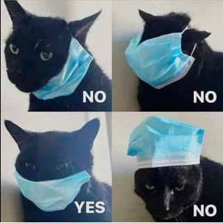cat-with-mask