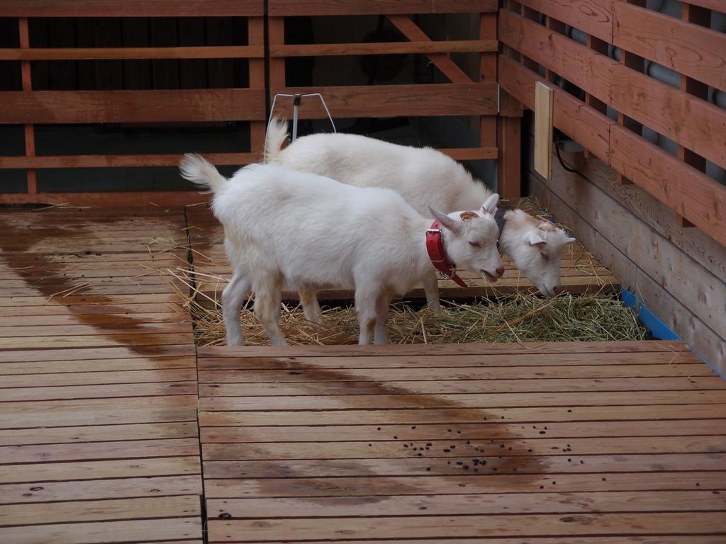 パソナ本社 パソナ本社 20110606 個別「パソナ本社」の写真、画像、動画
