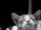 「夢見る仔猫」