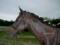 「愛馬の日曜日のポートレート」