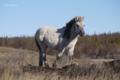 「お父さんの馬たち:初雪前の青空を背景にした仔馬のポートレート」