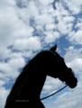 「愛馬の秋のシルエット」