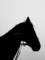 「愛馬のシルエット」